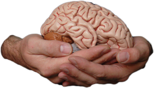 How Your Brain Works |
